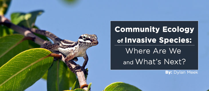 island-conservation-preventing-extinctions-community-ecology-invasive-species-feat
