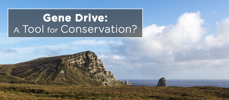 island-conservation-preventing-extinctions-gene-drive-tool-conservation-feat