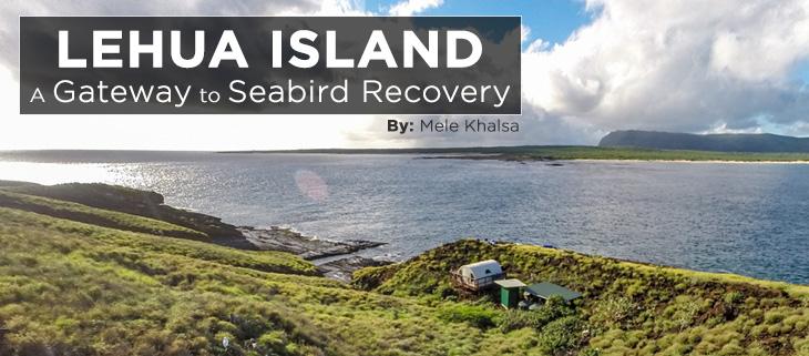 island-conservation-preventing-extinctions-mele-lehua-island-feat-2