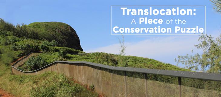 island-conservation-seabird-translocation-feat