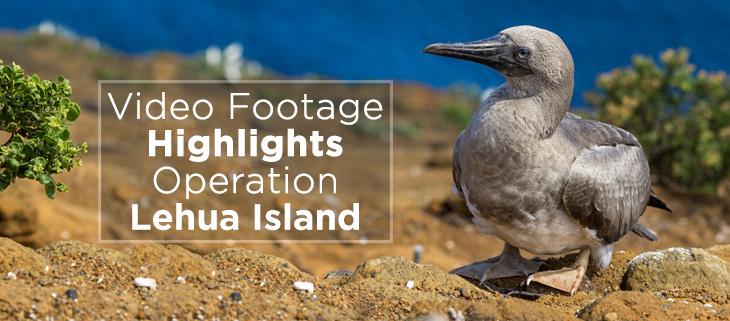 island-conservation-watch-operation-lehua-island-video-lehua rat poison drop pilot whales