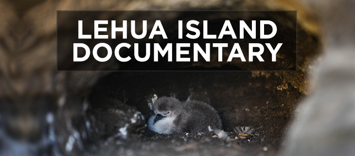 island-conservation-preventing-extinctions-lehua-island-rats-poison-feat