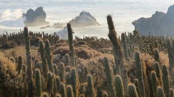 Chañaral Coastal Landscape. Credit: Ivan Torres/Island Conservation