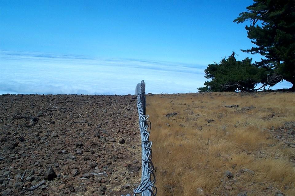 island-conservation-invasive-goats-guadalupe-island