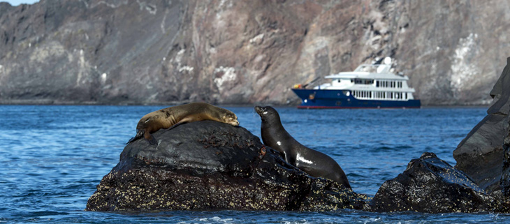 island-conservation-invasive-species-preventing-extinctions-ecoventura-yacht-galapagos