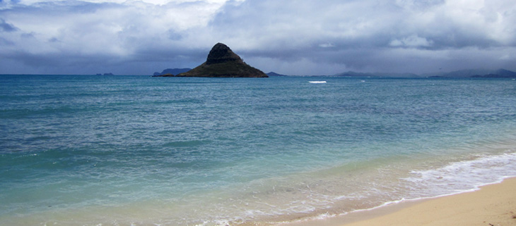 island-conservation-invasive-species-preventing-extinctions-sea-urchin-hawaii-native-species-Kāne'ohe-Bay-feat