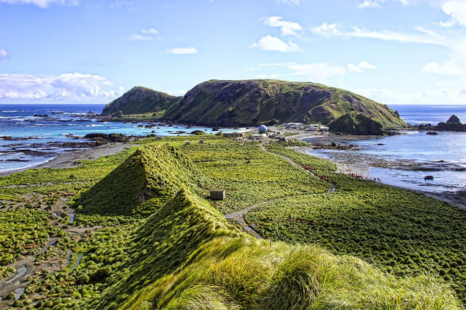 island-conservation-invasive-species-WHYY-podcast-Macquarie-Island