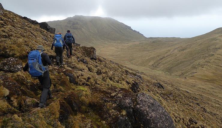 island-conservation-invasive-species-preventing-extincions-gough-island-rspb