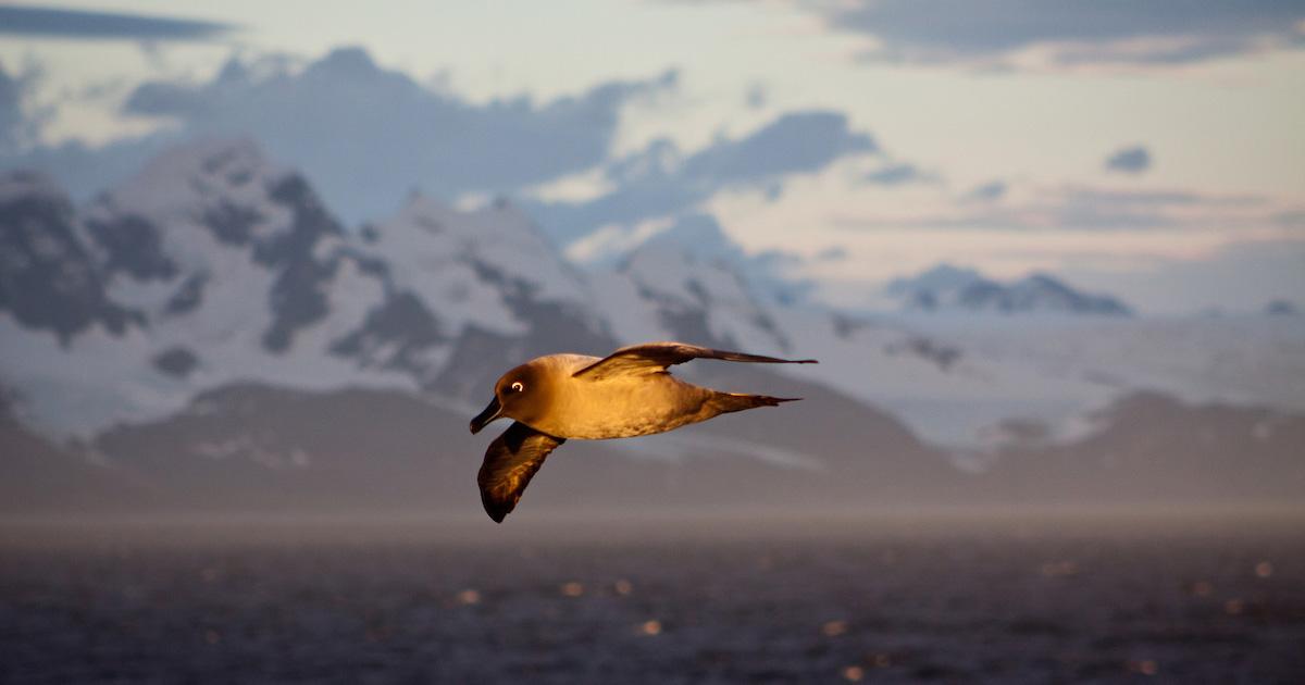 island-conservation-invasive-species-preventing-extinctions-sierra-club-jonathan-franzen