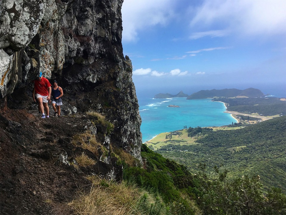 island-conservation-invasive-species-preventing-extinction-lord-howe-island-conservation-volunteer-opportunity