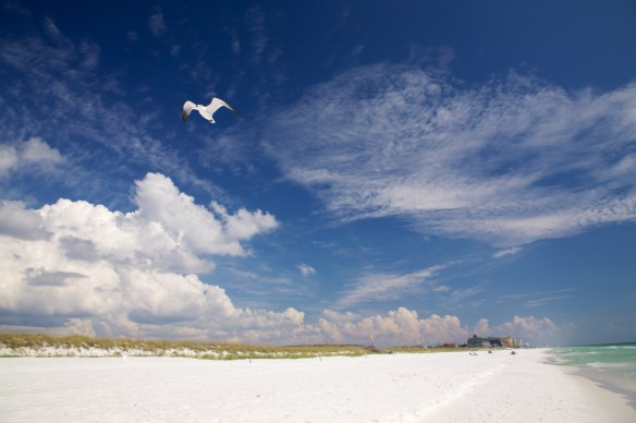 Henderson Beach   022