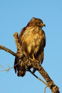 mystery bird  001