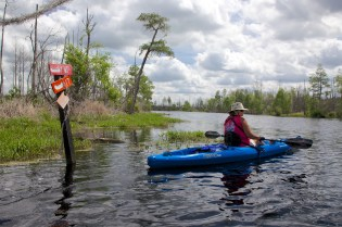 Swamp 005
