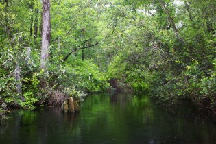 Swamp 058