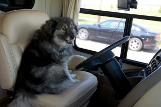 Can I drive Dad?