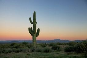 Phoenix  050