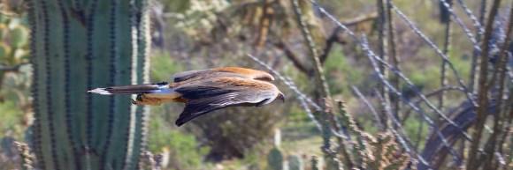Tucson 084