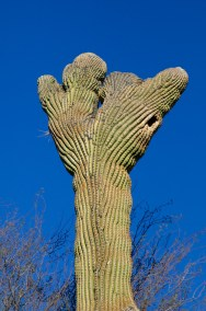 Tucson  088