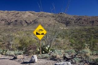 Tucson  099