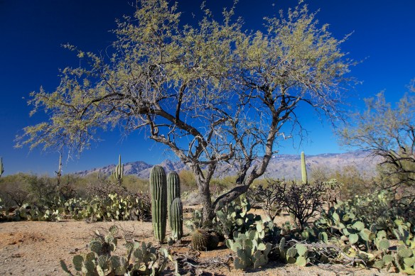 Tucson  104