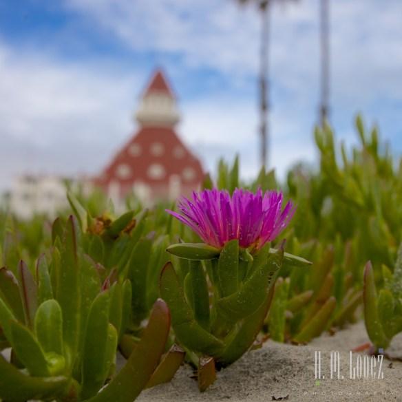 San Diego Beaches  034