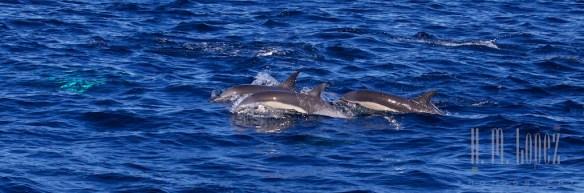 Whales SD  067