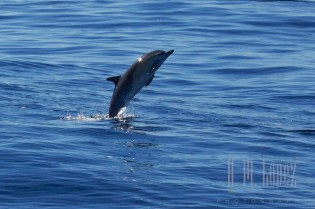 Whales SD  069
