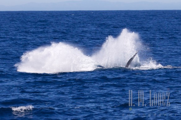 Whales SD  095