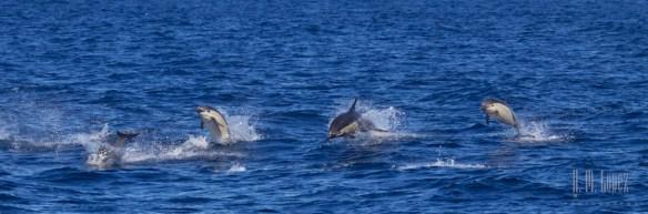 Whales SD  110