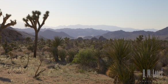 joshua tree np  001