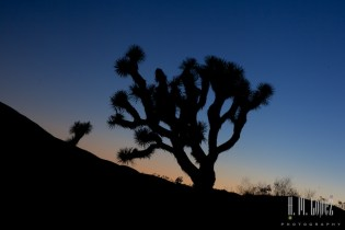 joshua tree np  023