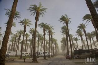 sandstorm  004