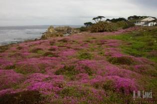 Monterey  006