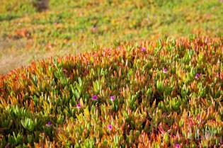 Monterey  014