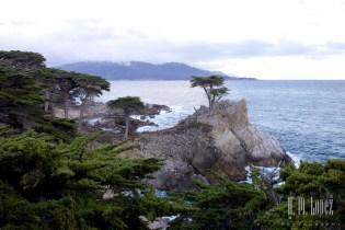 Monterey  019