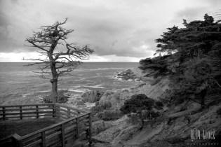 Monterey  021