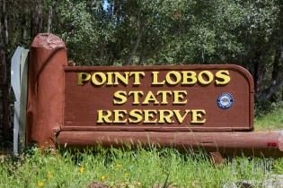 Point Lobos  002