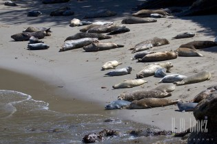 Point Lobos  003