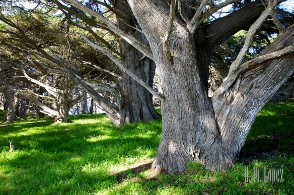 Point Lobos  026