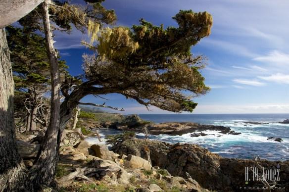 Point Lobos  027