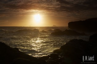 Point Lobos  044