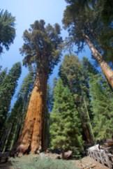 Sequoia 078