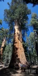Sequoia 081