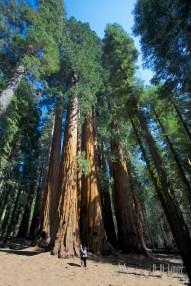 Sequoia 092