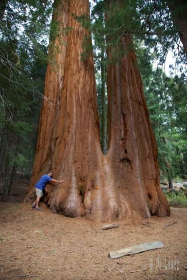 Sequoia 102