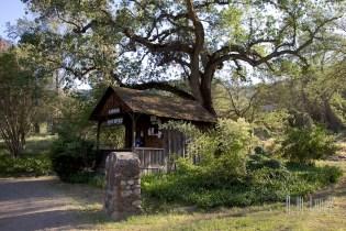 Sequoia  114