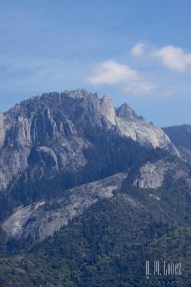 Sequoia 126