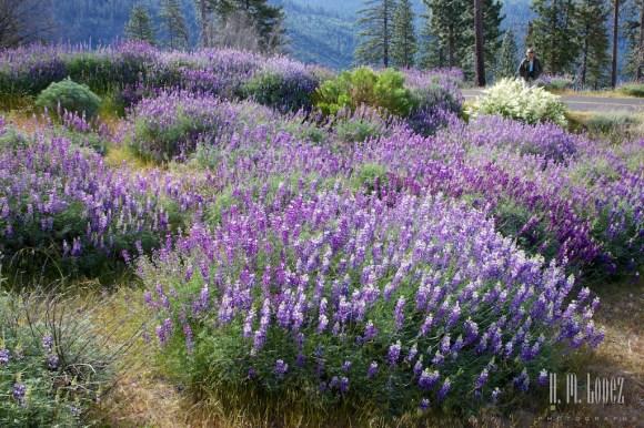 Yosemite Valley 019