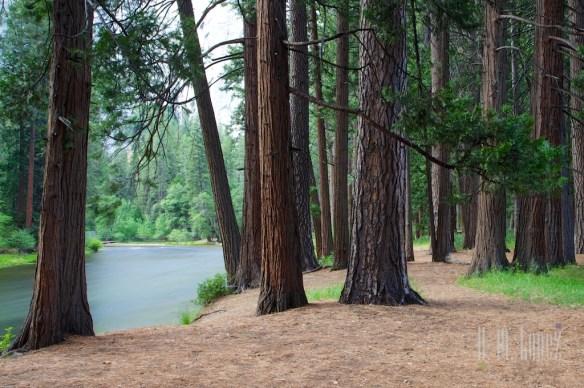 Yosemite Valley  094
