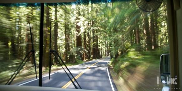 north redwoods  001